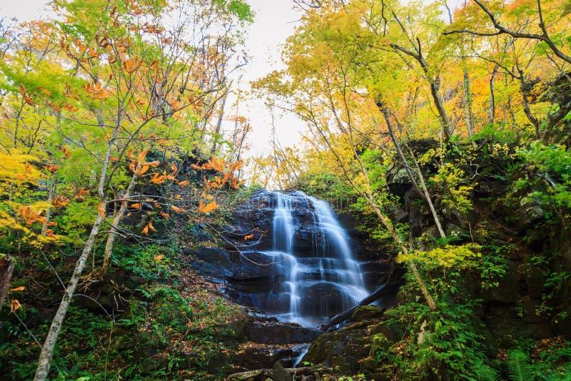 Bevattna nedgången av den Oirase strömmen i höst på den Towada Hachimantai nationalparken i Aomori, Tohoku, Japan arkivfoton