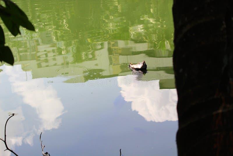 Bevattna och skyen fotografering för bildbyråer