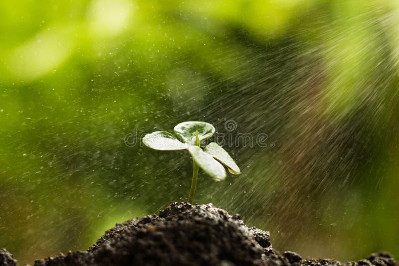 Bevattna plantan på jord med den härliga gröna naturen royaltyfri foto
