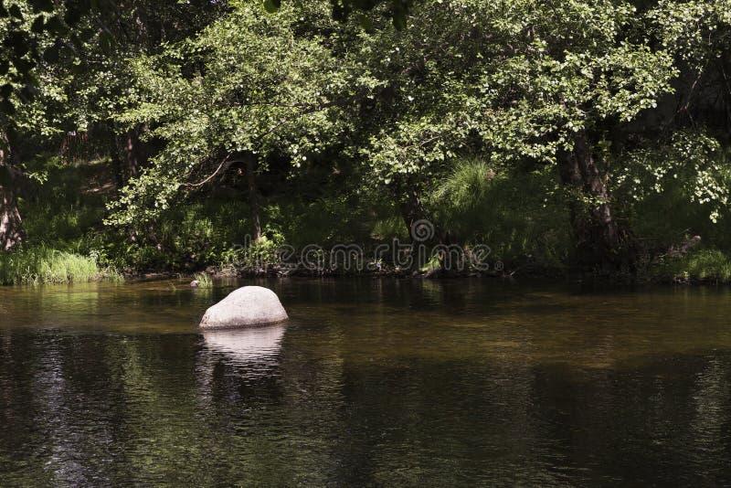 Bevattna rinnande saktar och lugnar ner en flod royaltyfri foto