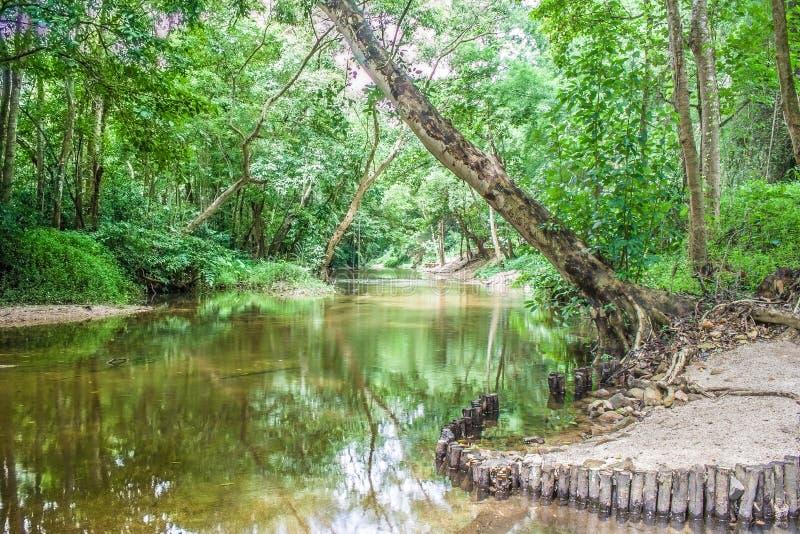 Bevattna strömmen eller floden som flödar till och med den gröna skogen arkivbild