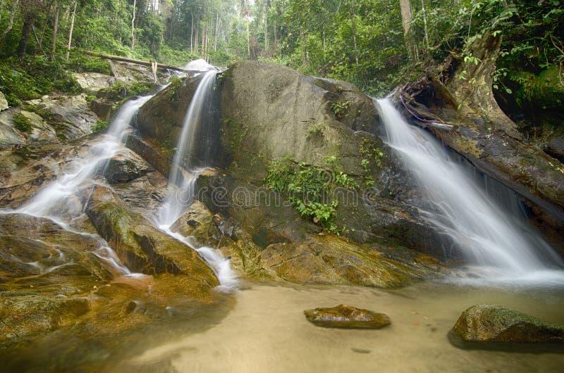 Bevattna strömmen och den härliga vattenfallet som omges av den gröna skogen fotografering för bildbyråer