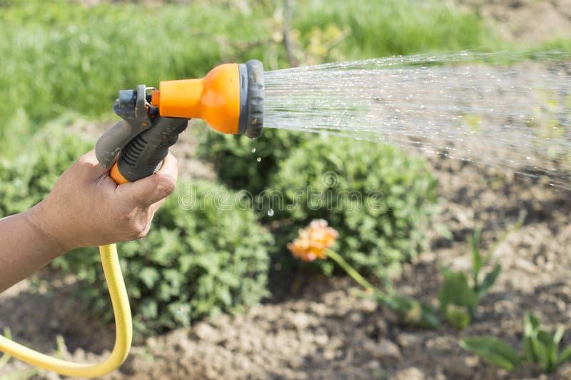 Bevattna vatten från blommor för en slangträdgård royaltyfri bild