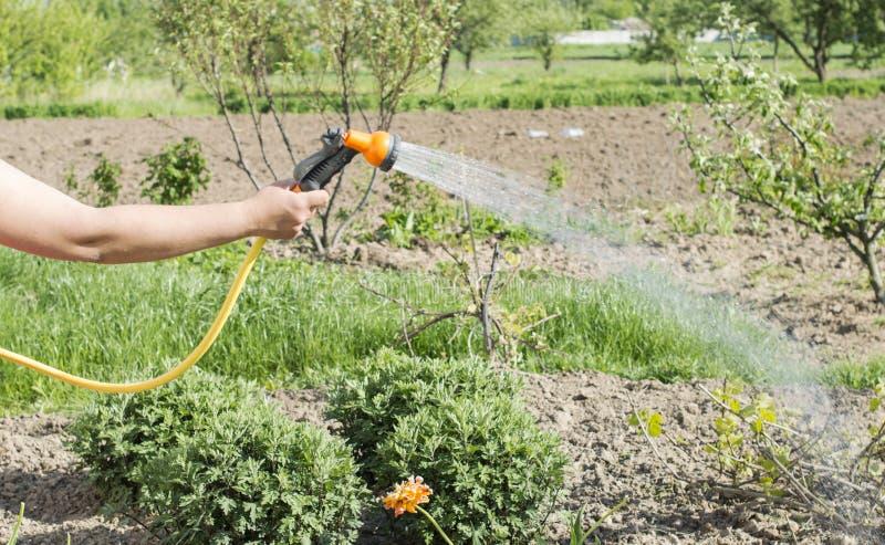 Bevattna vatten från en slang av olika växter royaltyfria bilder