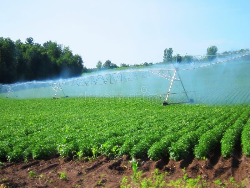 Bevattningsystem som bevattnar det industriella fältet för lantgård för skördjordbruksmark fotografering för bildbyråer