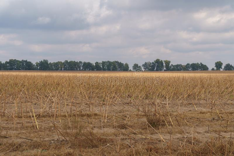 Beveled field after harvesting in autumn. Beveled field after harvesting in the autumn royalty free stock photo