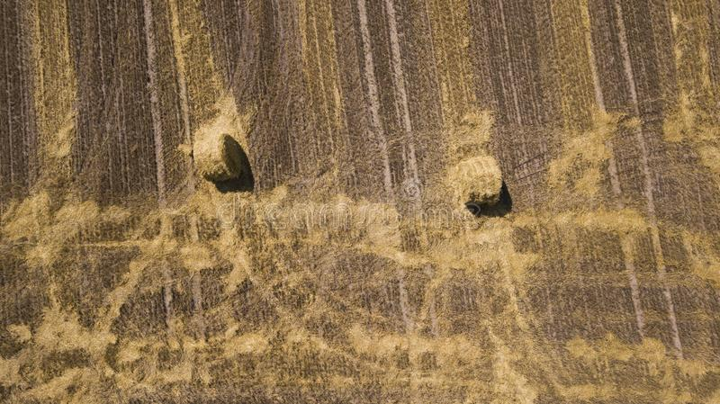 Beveled wheat field aerial photography with drone.  stock photo