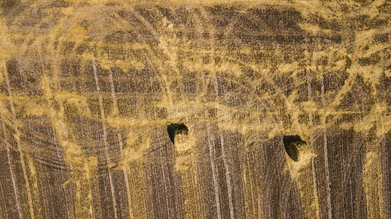 Beveled wheat field aerial photography with drone.  royalty free stock photos