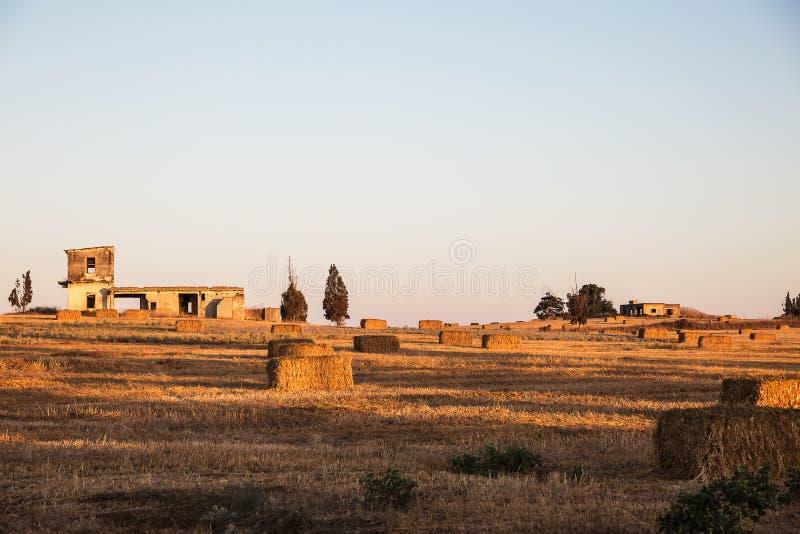 Beveled wheat field at sunset. Haystacks royalty free stock photos