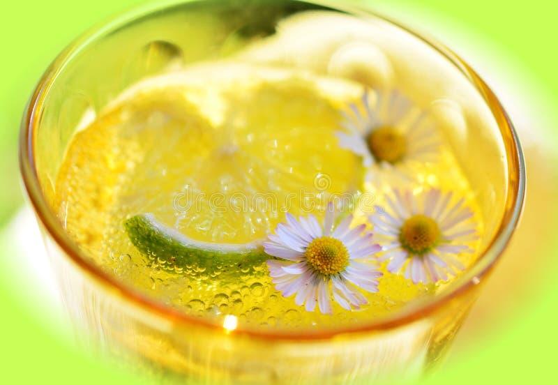 Beverage, Citrus, Close stock photo