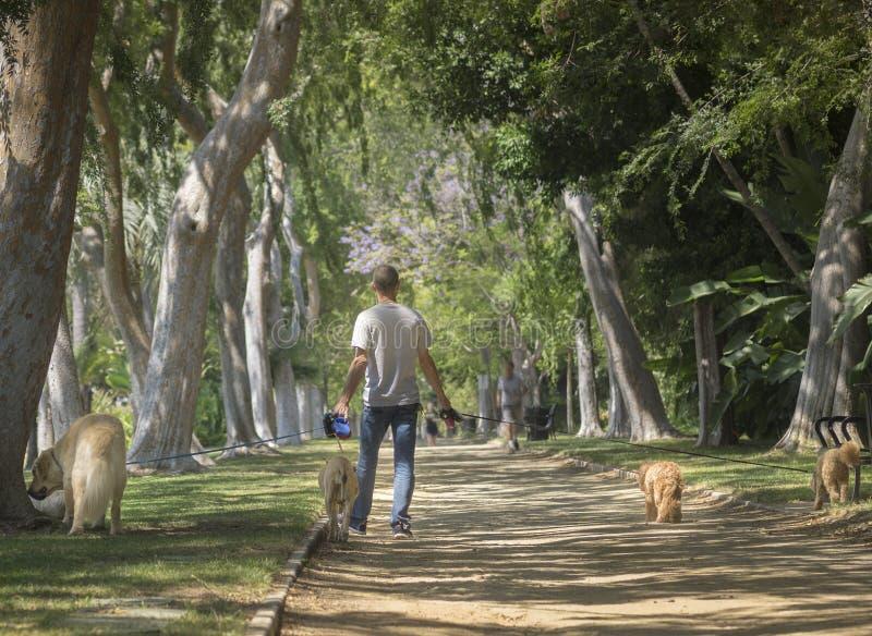 Beverly Hills CA, USA Juni, 2nd, 2015 härliga träd fodrade Beve arkivbild