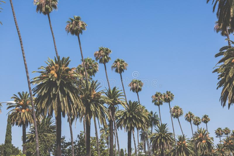 Beverly Hills gömma i handflatan tonat retro för tappning royaltyfri fotografi