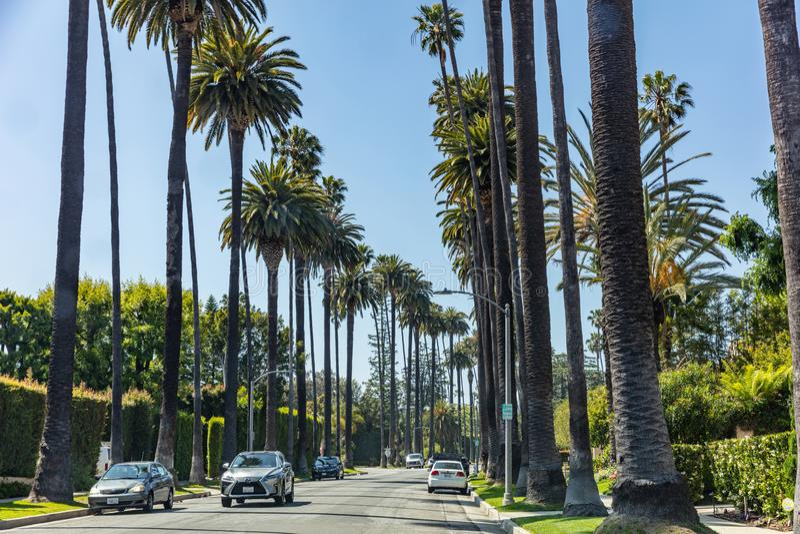 Beverly Hills LA Kalifornien, USA Palmtr?d och bilar arkivfoto