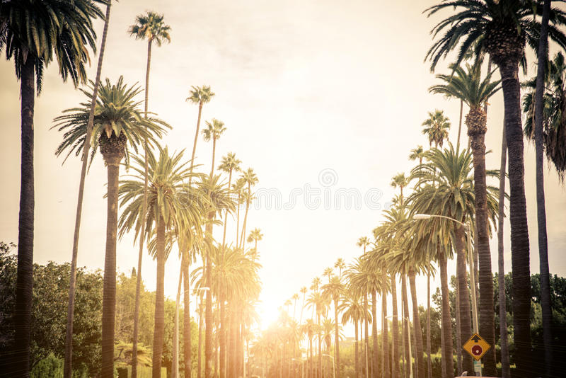 Beverly Hills, Los Angeles royalty free stock photography