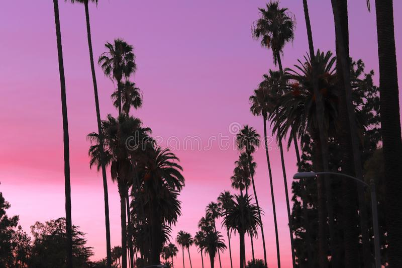 Beverly Hills Palm Trees royaltyfri fotografi