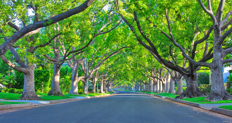 Beverly Hills Street. A shot of quiet Beverly Hills Road royalty free stock photos