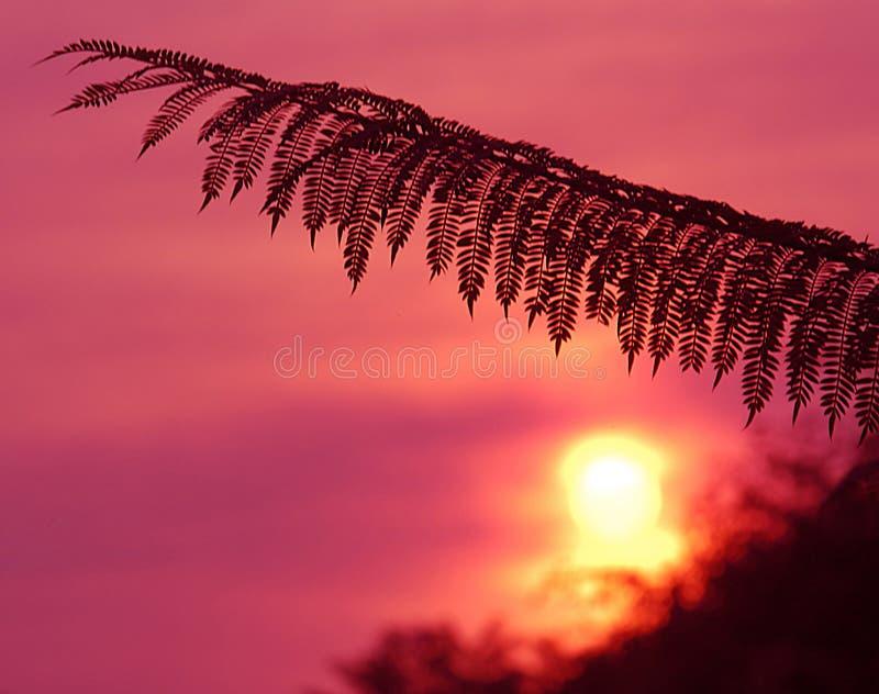 Beverly Hills Sunrise Free Stock Photography