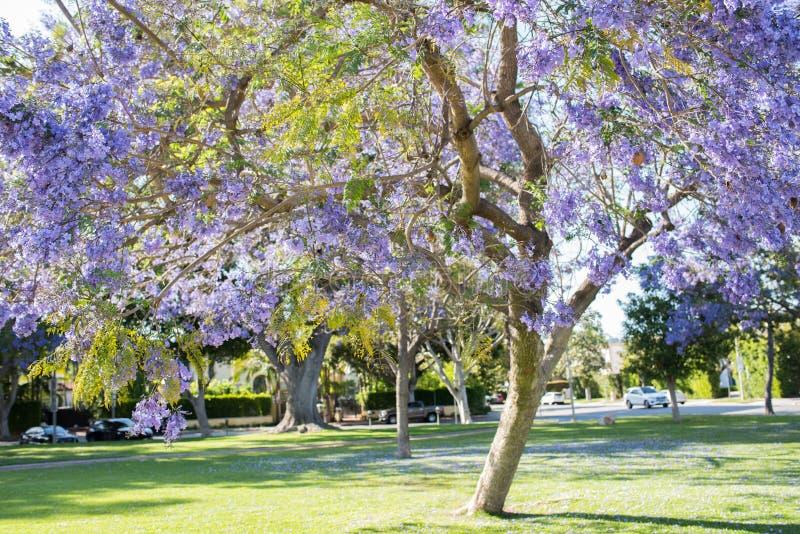 beverly Kalifornien kullar royaltyfri fotografi