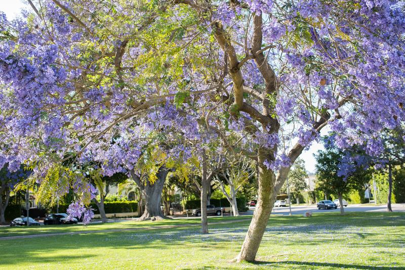 beverly Kalifornien kullar royaltyfria foton