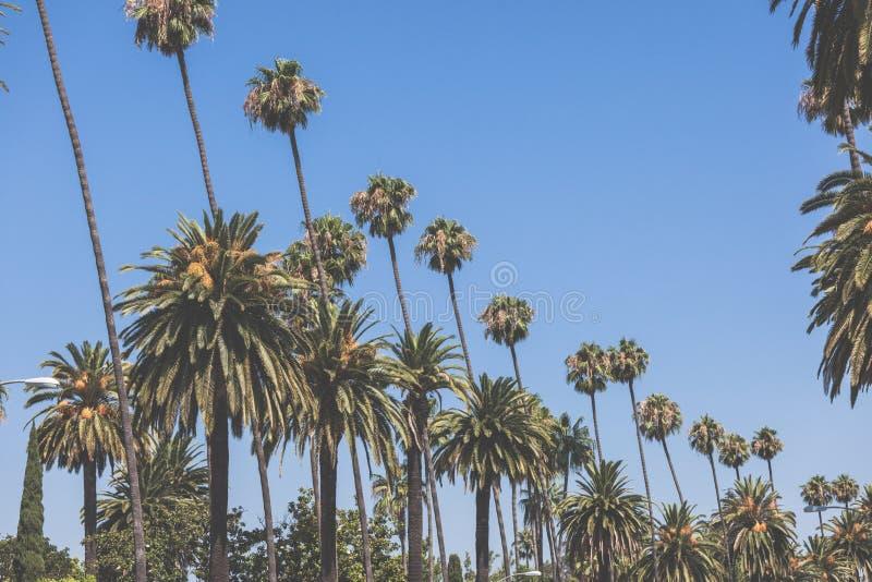 Beverly wzgórzy palm rocznika retro stonowany fotografia royalty free