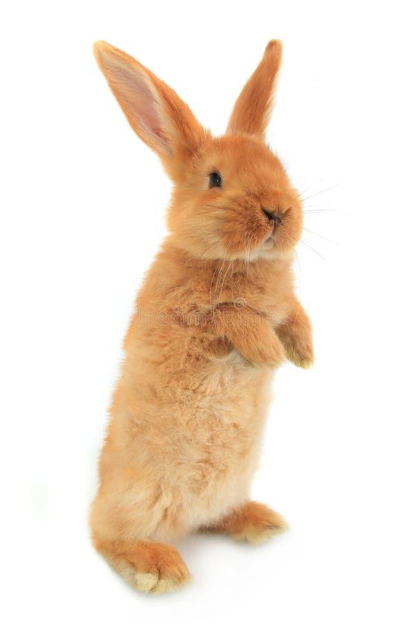 Bevindend konijn stock afbeelding