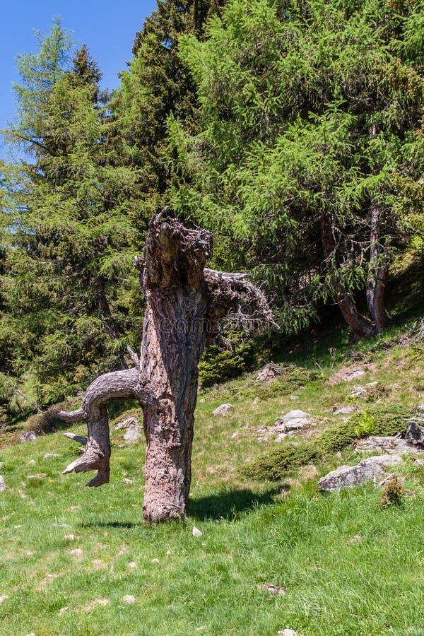 Bevindende boomboomstam die als een reus van de feestaart kijken royalty-vrije stock afbeelding