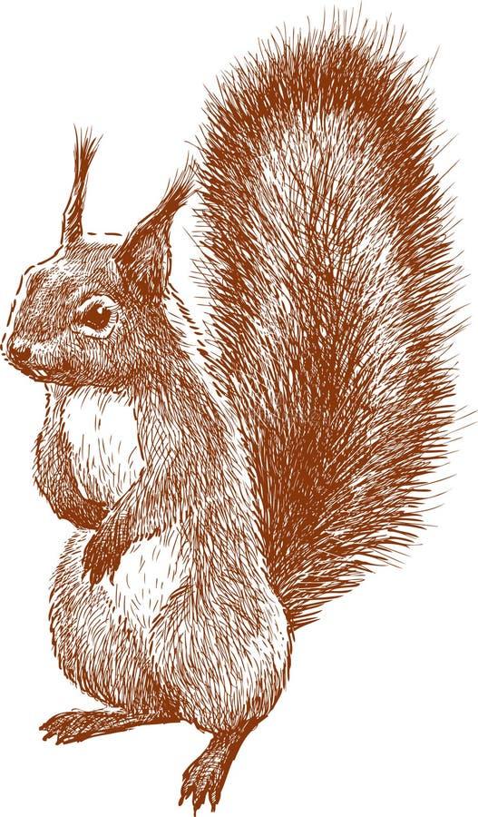 Bevindende eekhoorn stock illustratie