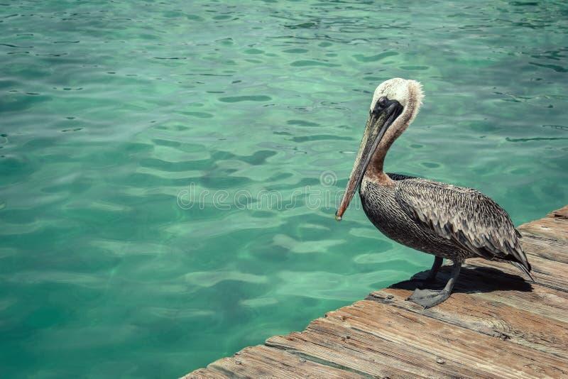 Bevindende het Dok Blauwe Oceaan van de pelikaanvogel royalty-vrije stock afbeelding