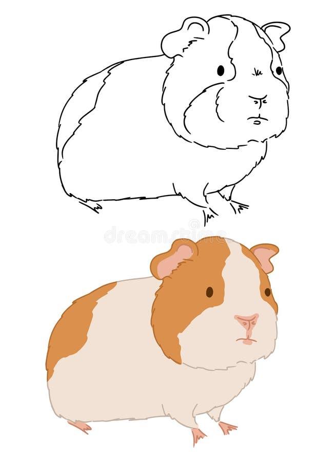 Bevindende proefkonijnillustratie op witte achtergrond Vectorkunst van hand getrokken weinig leuke cavy Verschillende schetsen va royalty-vrije illustratie