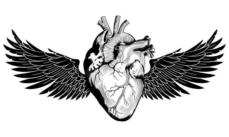 Bevingad mänsklig hjärta royaltyfri illustrationer