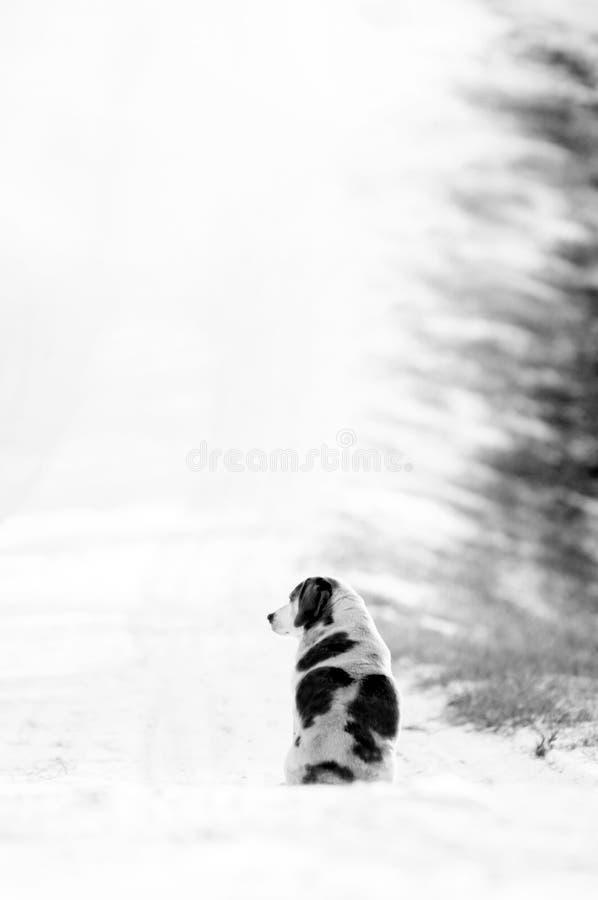 Bevlekte hondzitting op een sneeuwsteeg van het land stock fotografie