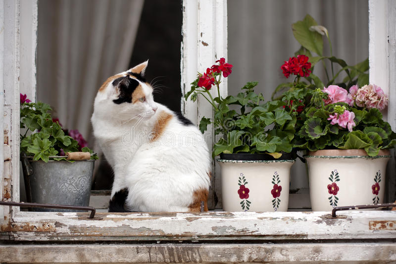 Bevlekte kat op een venster royalty-vrije stock afbeelding