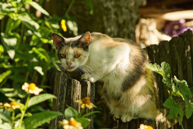 Bevlekte kattenzitting op een grijze houten omheining stock fotografie