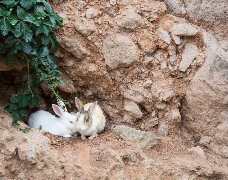 Download Bevlekte konijnen stock afbeelding. Afbeelding bestaande uit gras - 107700455