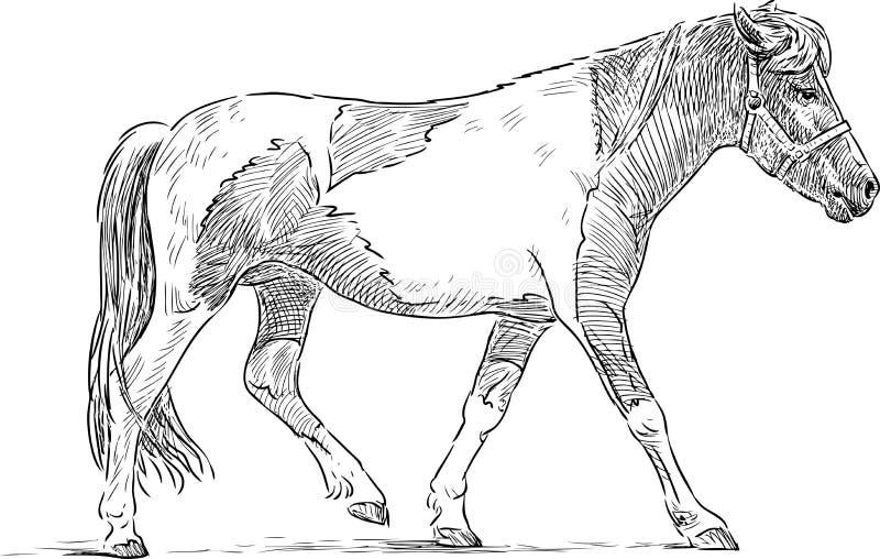 Bevlekte poney vector illustratie