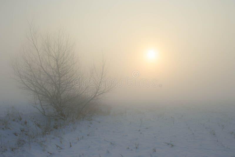 Bevorstehender Tal-Nebel bei Sonnenuntergang stockbilder