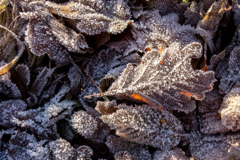 Bevroren Bladeren in de winter De kristallen van het ijs Achtergrond stock foto
