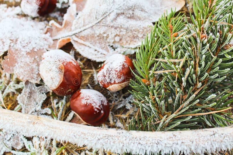 Bevroren bladeren, kastanje, boomstam en naaldtak royalty-vrije stock foto