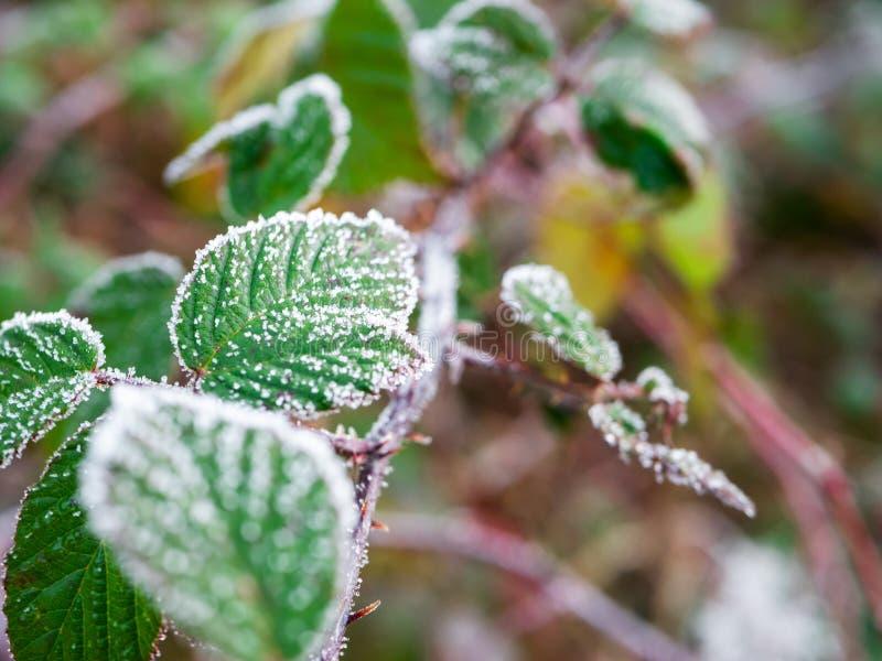 Bevroren Bladeren met hoar vorst op bovenkant royalty-vrije stock fotografie