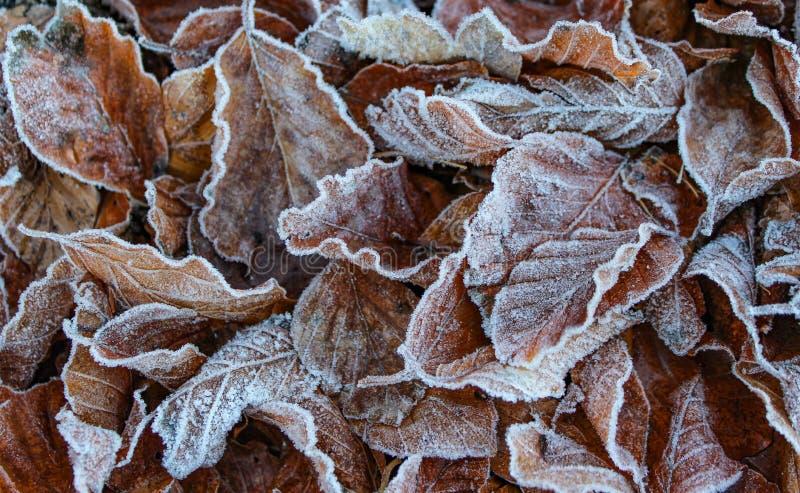 Bevroren bladerenclose-up stock fotografie