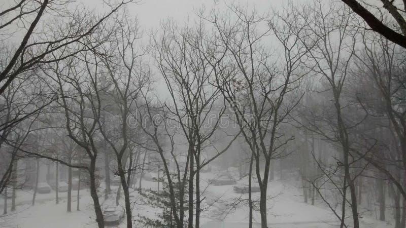 Bevroren bomen royalty-vrije stock foto's