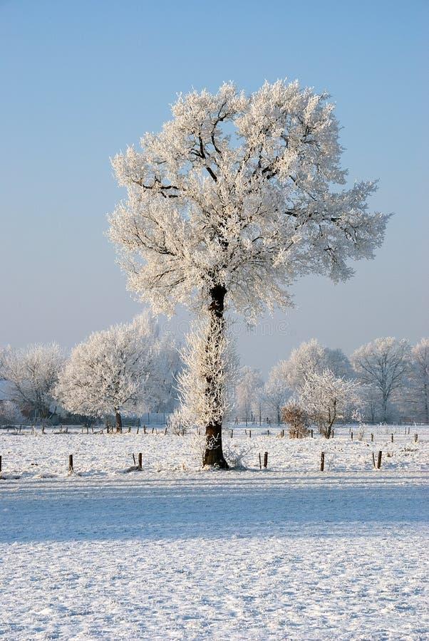 Bevroren bomen in de winter   royalty-vrije stock fotografie
