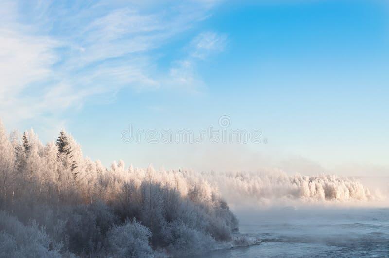Bevroren bomen dichtbij een Rivier royalty-vrije stock foto