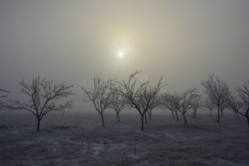 Bevroren bomen en mist 01 royalty-vrije stock afbeeldingen