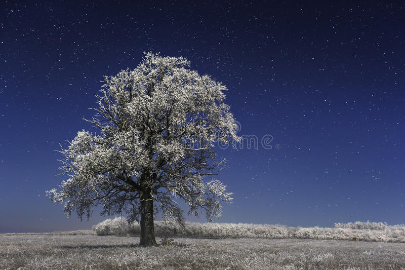 Bevroren boom onder de wintersterren stock afbeeldingen