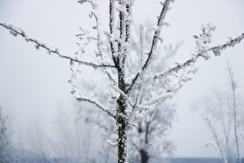 Bevroren boom op de winter stock afbeeldingen
