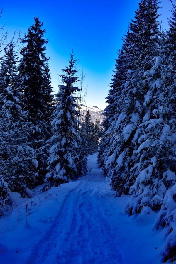 Bevroren bos bij avond stock afbeeldingen