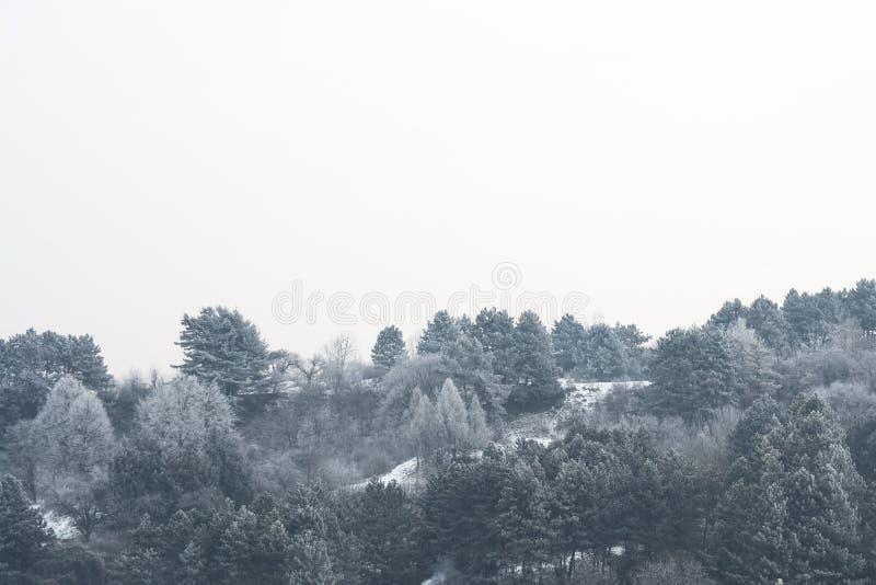 Bevroren bos zwart-wit landschap royalty-vrije stock afbeeldingen