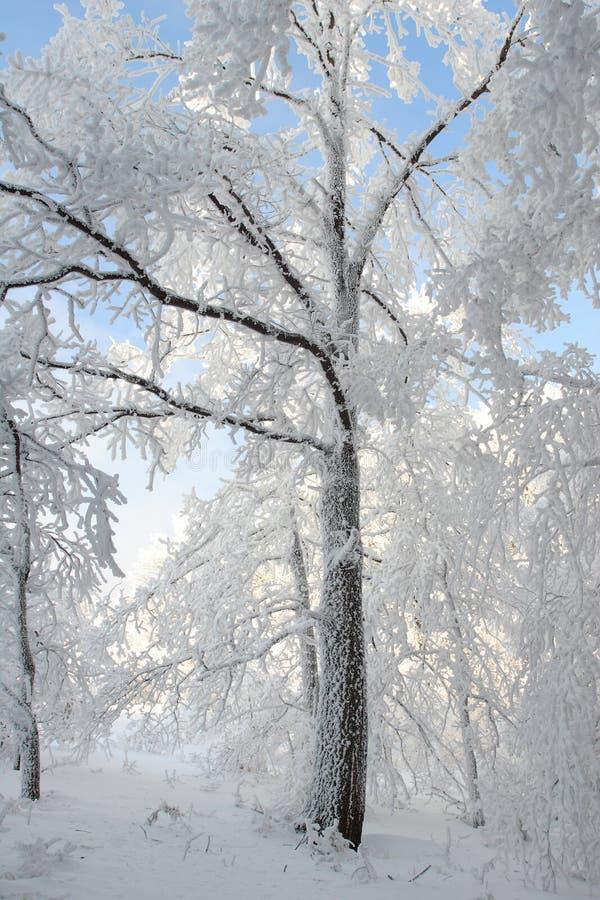 Bevroren de winterboom die met sneeuw wordt behandeld royalty-vrije stock foto