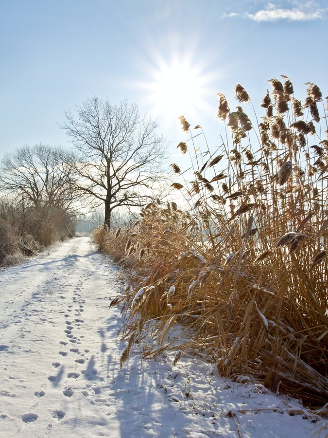 Bevroren de winterlandschap royalty-vrije stock fotografie